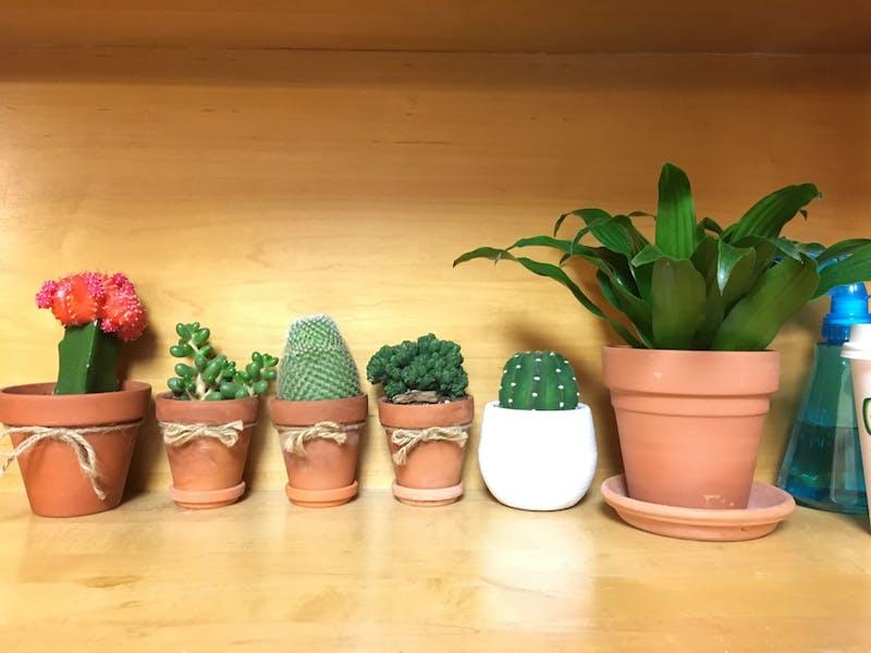 Plants line the shelf in first-year Carmen Li's dorm room.
