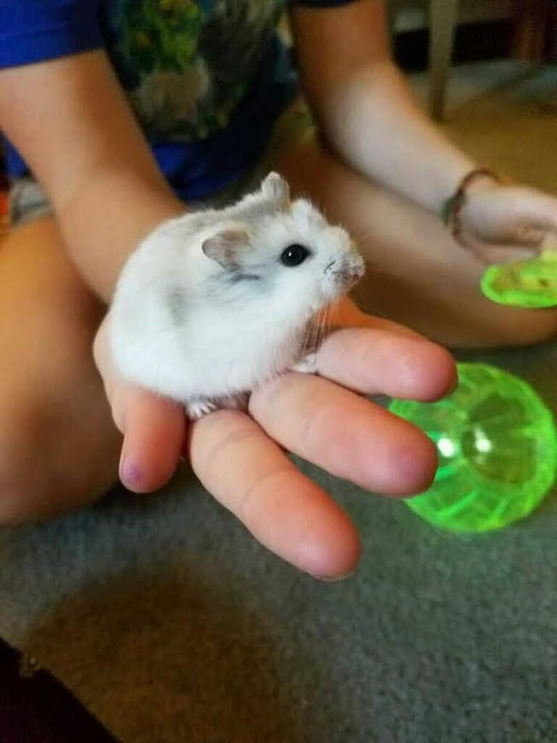 Some students have secret pets, such as Luna the hamster, in their dormitories.