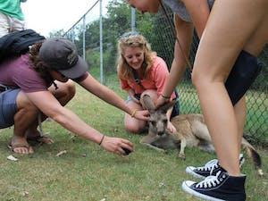 Callie pets a kangaroo while studying abroad in Australia. Photo courtesy of Callie Riek.