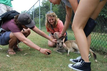Callie pets a kangaroo while studying abroad in Australia. Photo courtesy of Callie Riek.