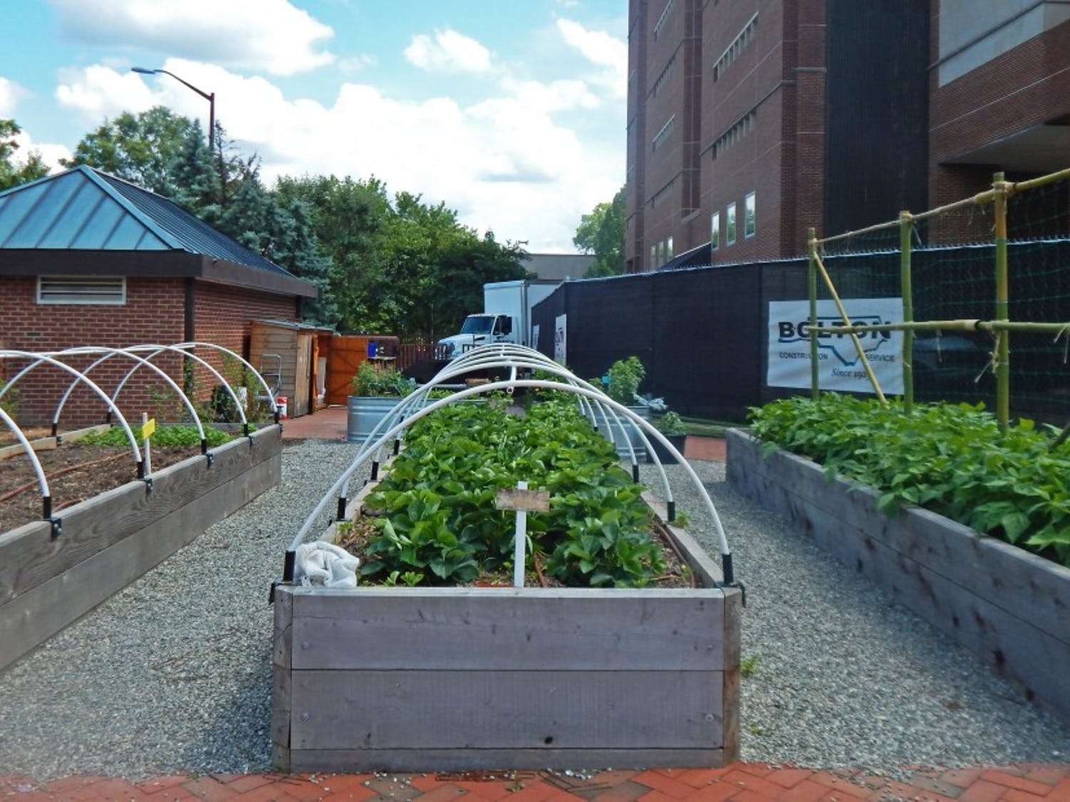 The pilot Edible Campus garden is located behind Davis Library and hosts a number of fruits and vegetables that are ready or nearly ready for harvest, including oregano and chives.