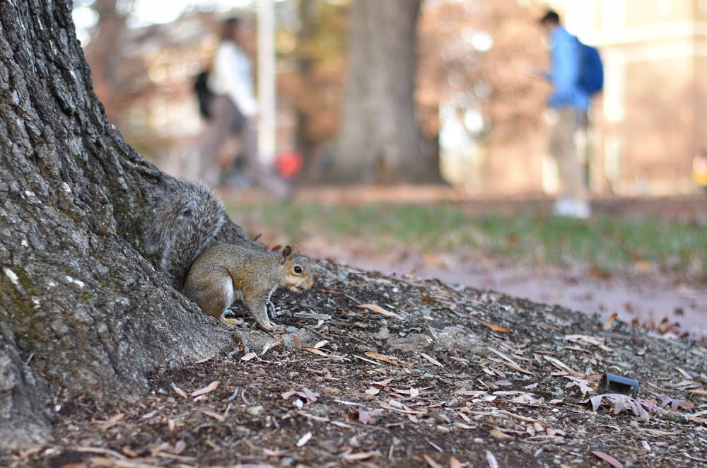 A tribute to the campus squirrels for National Squirrel Day
