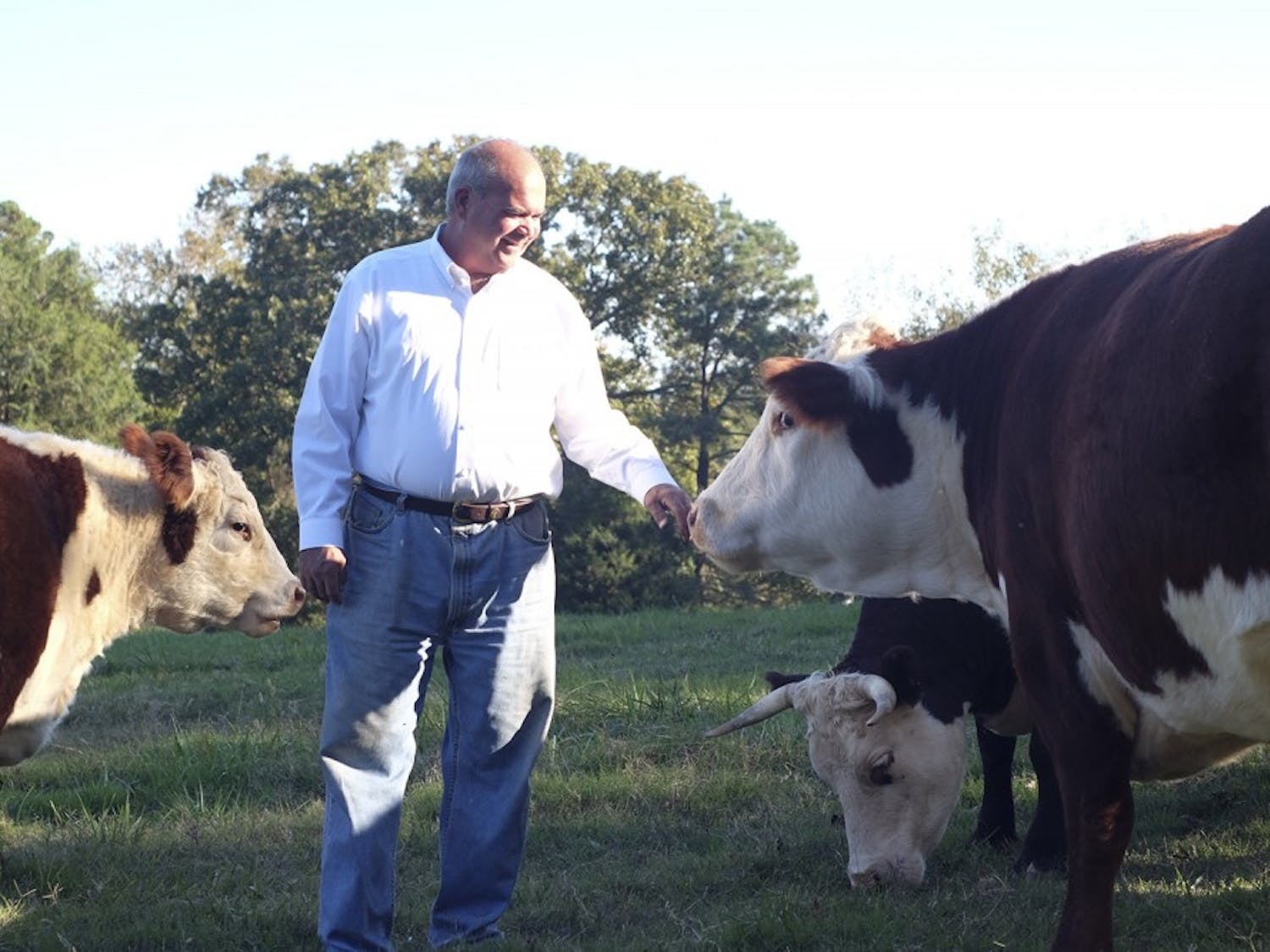 Chris Hogan poses with his cows while they feed on Thursday, Oct 22. Hogan says that the cows are more like pets than normal farm animals.
