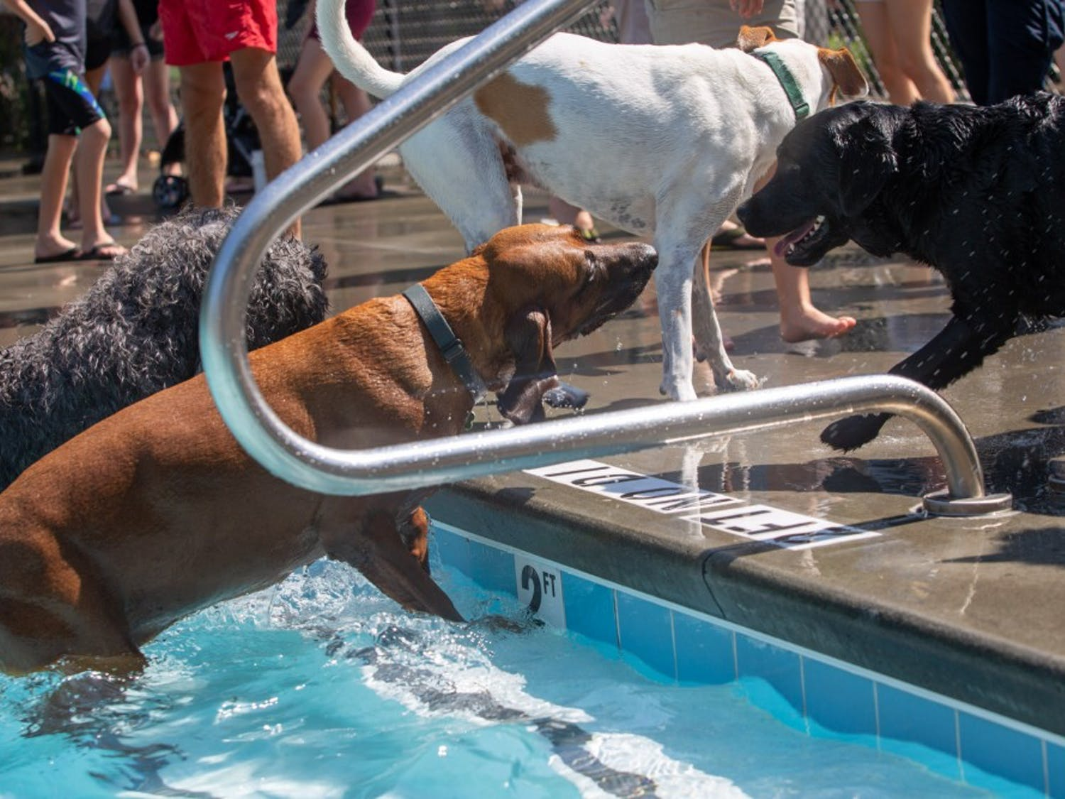 Orange County's 15th Annual Dog Swim at Heritage Hills Pool in Chapel Hill, NC on Sunday September 22, 2019.
