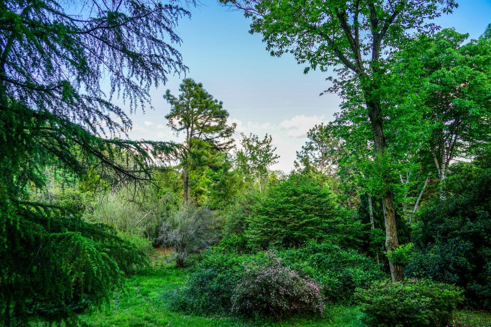 The Keith Arboretum debate is contentious, but it doesn't have to be confusing