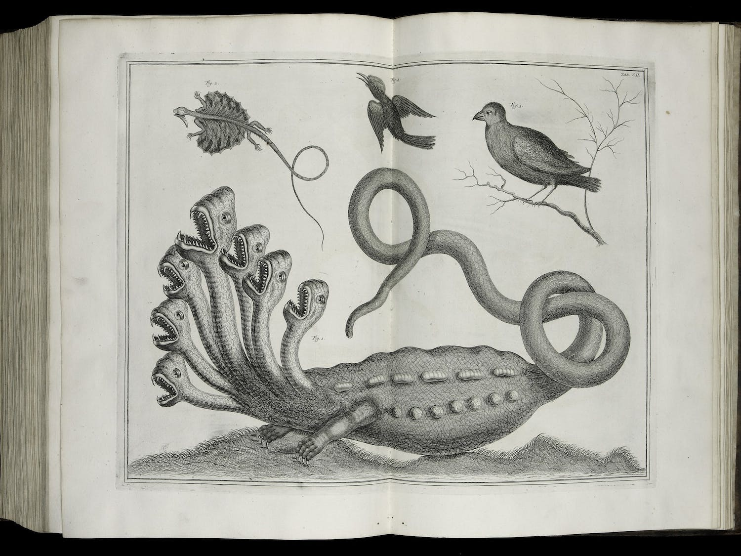 A page from one of the rare books donated by Florence Fearrington: Albertus Seba, Locupletissimi rerum naturalium thesauri accurata descriptio (Amsterdam: Wetsten, Smith and Jannson-Waesberg, 1734). From the Florence Fearrington Collection. Photo courtesy UNC-Chapel Hill University Libraries.