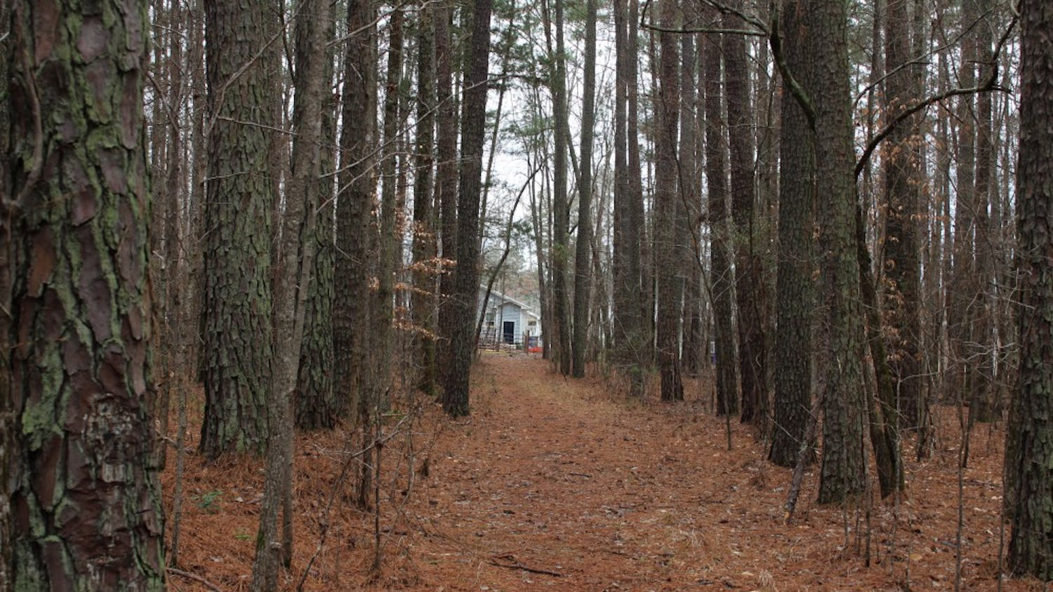 The Greene Tract is an undeveloped 164 acre property north of Chapel Hill on Sunday, Feb. 17, 2019.