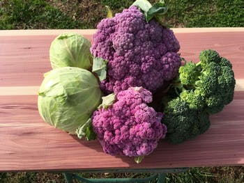 The Graham Family Farm sells produce like this at the Carrboro Farmers' Market, which is staying open during the COVID-19 pandemic. Photo courtesy of Louis Graham.