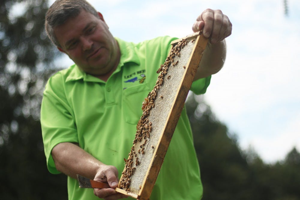 Honeybees have become increasingly difficult to keep alive