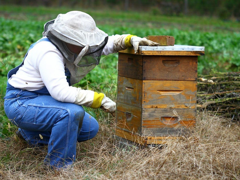 Liz Lindsey prepares her hives for winter.