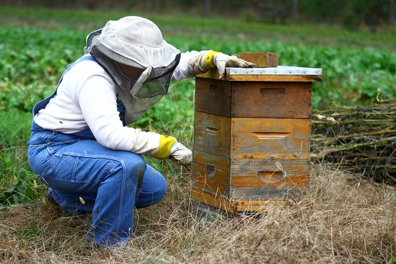 Liz Lindsey prepares her hives for winter.