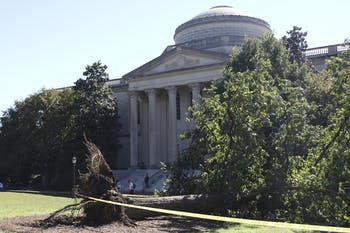 A large oak tree in front of Wilson library was uprooted by the winds from Hurricane Matthew.