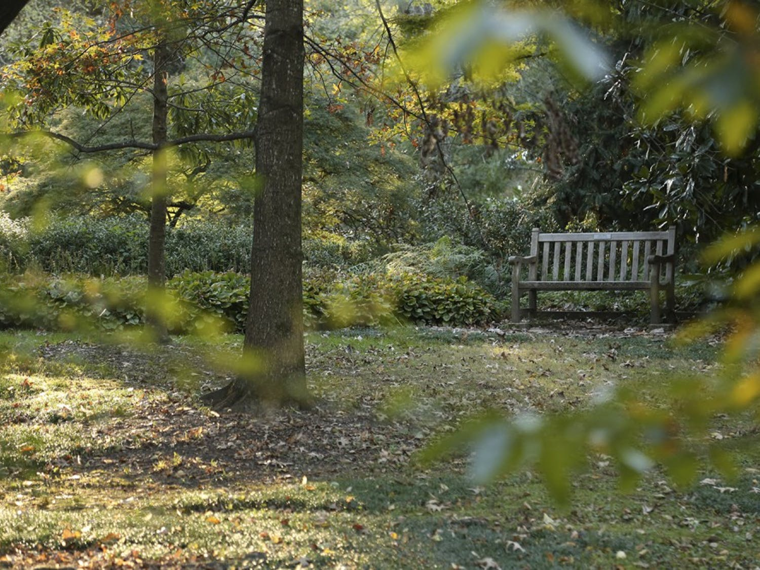 Coker Arboretum is known for its beautiful foliage and peaceful spots to rest.