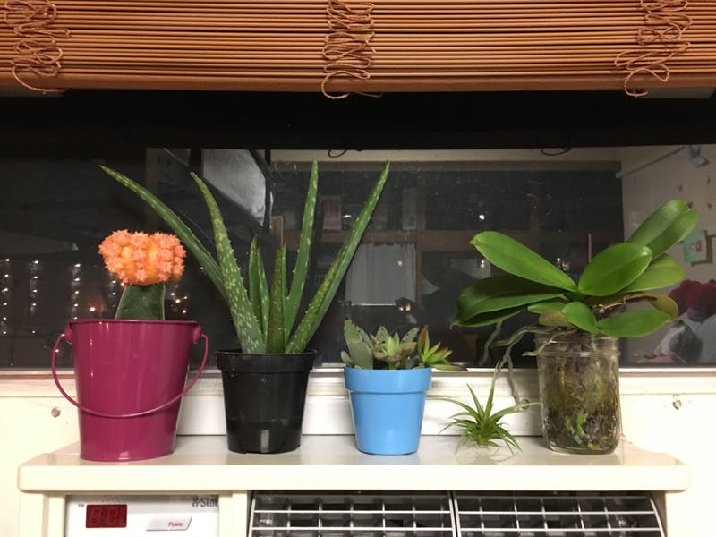 First-yearAlli Whitenack's plants remind her of home.