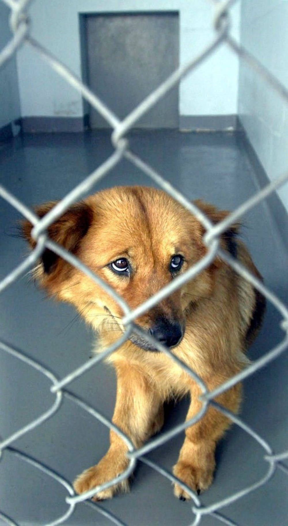 Pet stores, puppy mills cause bad behavior