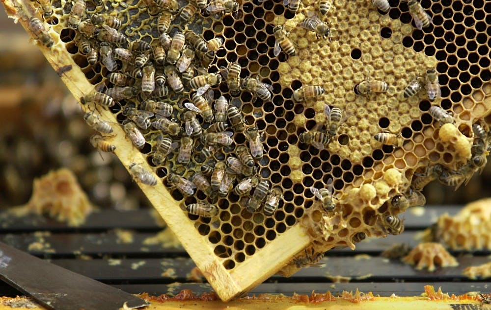Vote will come on bee-keeping