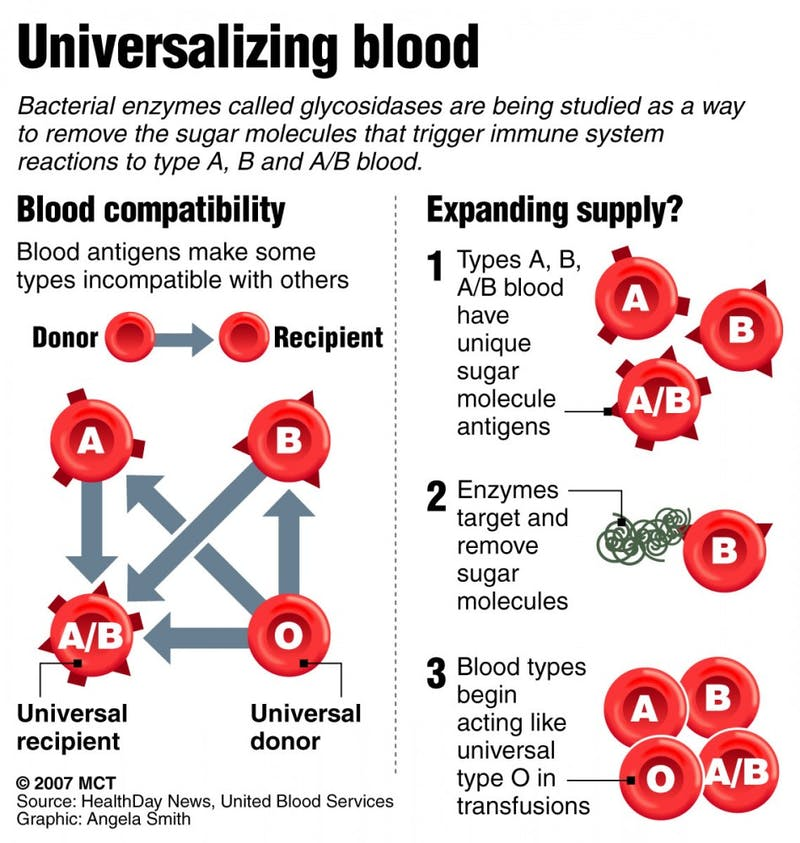 Graphic explains how human blood types affect donating and receiving blood; new research, led by a Danish scientist, shows there could be a way to make all blood types safe for patients.