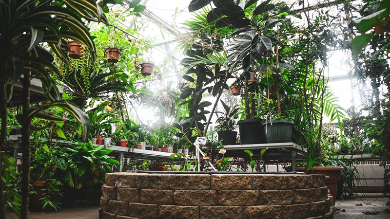 The greenhouse at EMU is open back to the public after being closed for over a year due to COVID-19.