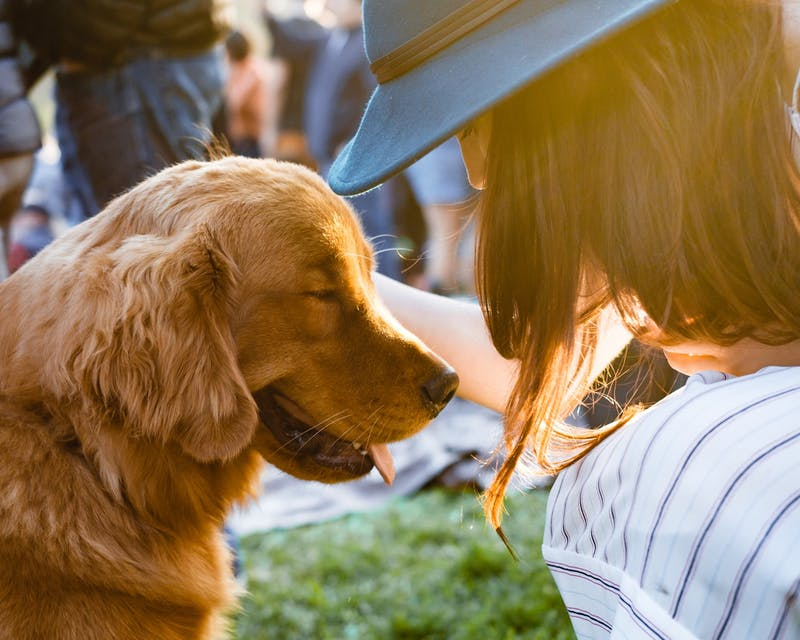 A pet brings companionship; adopting one can benefit both of you. Photo by Adam Griffith on Unsplash.
