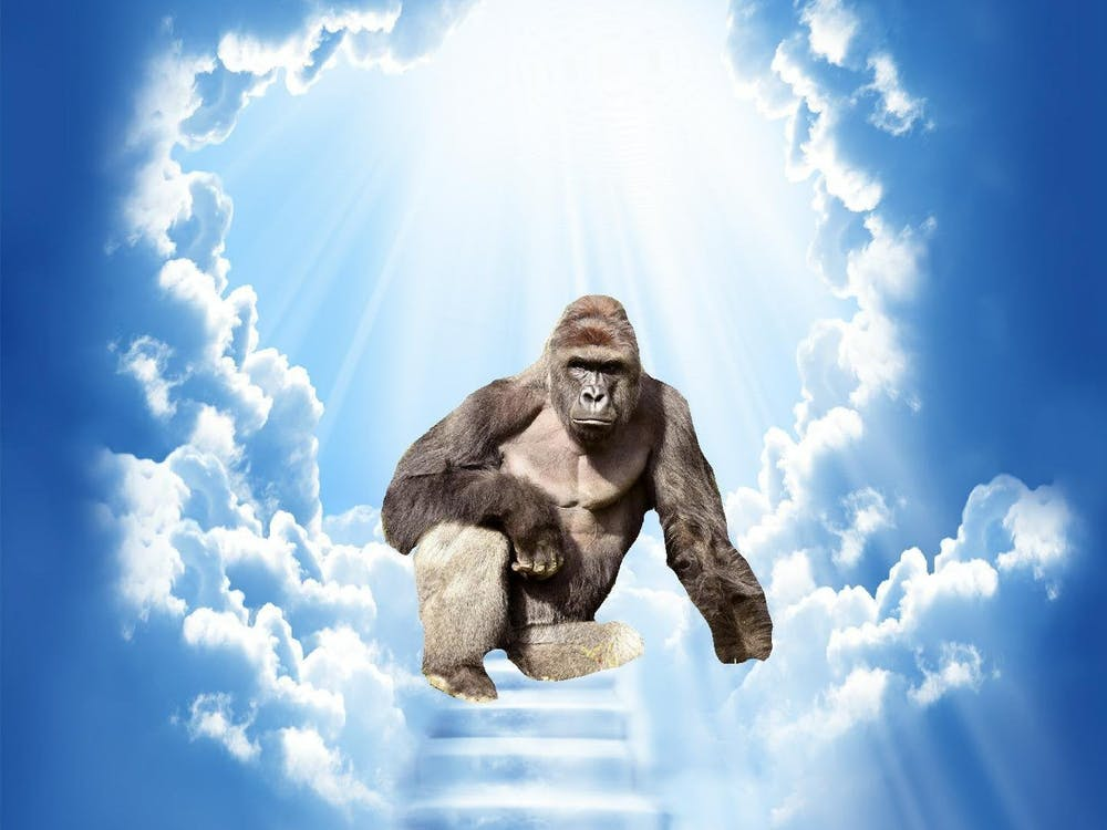 April Fools' Day is a tribute to the beloved gorilla, Harambe.