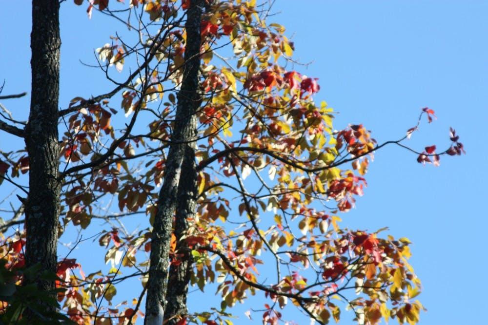 emu_fall_campus_2013_0041