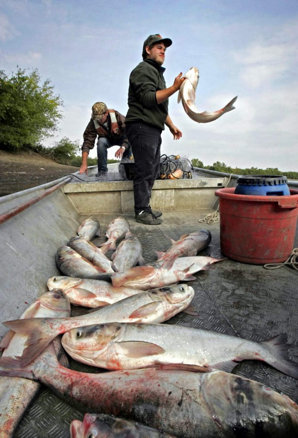 Invasive Asian carp threaten Great Lakes