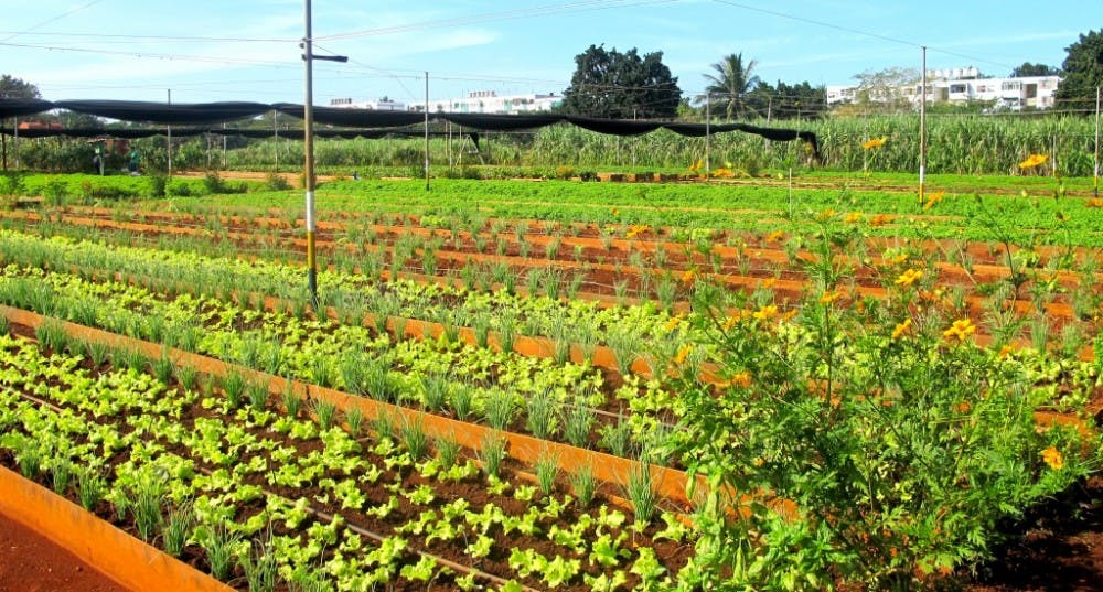 i-cuban-farm