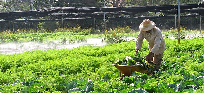 I-cuba-farming