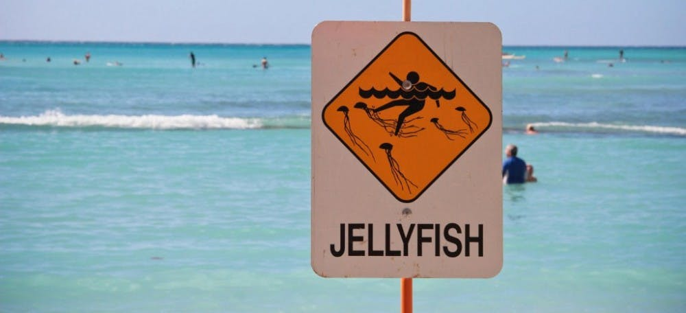 jellyfish-full