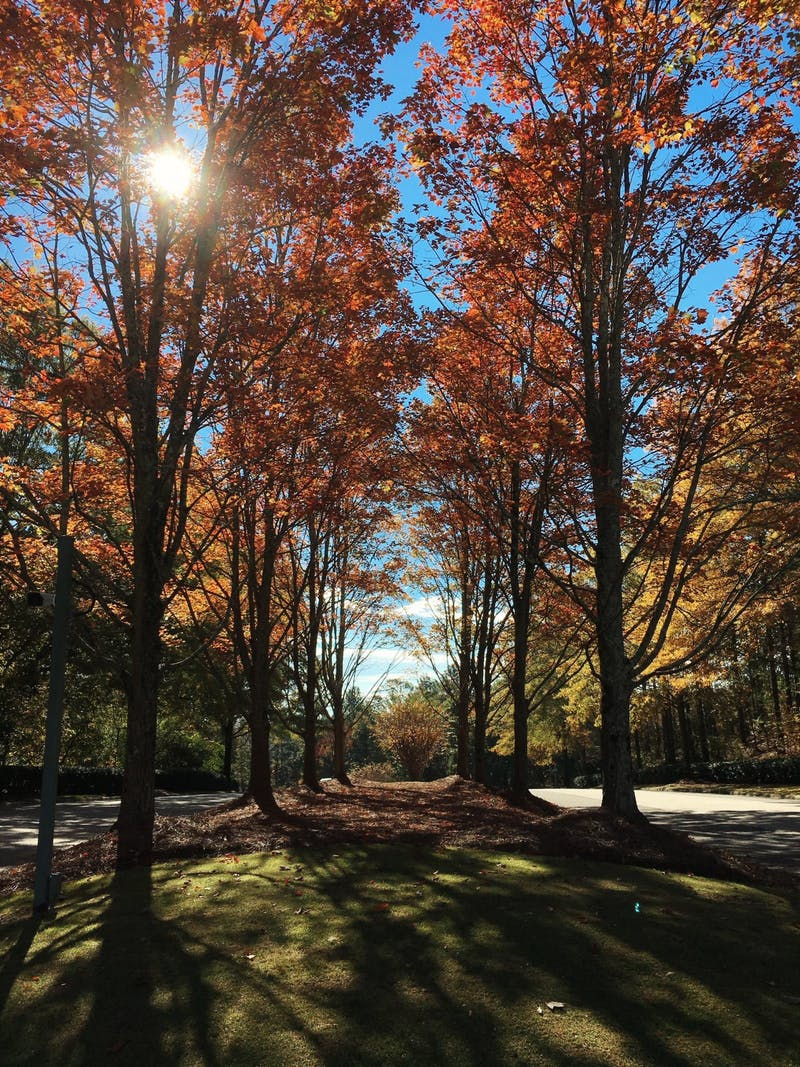 Contributor Katie Pfotzer comments on the changing colors of fall.Photo provided by Ashley Anderson