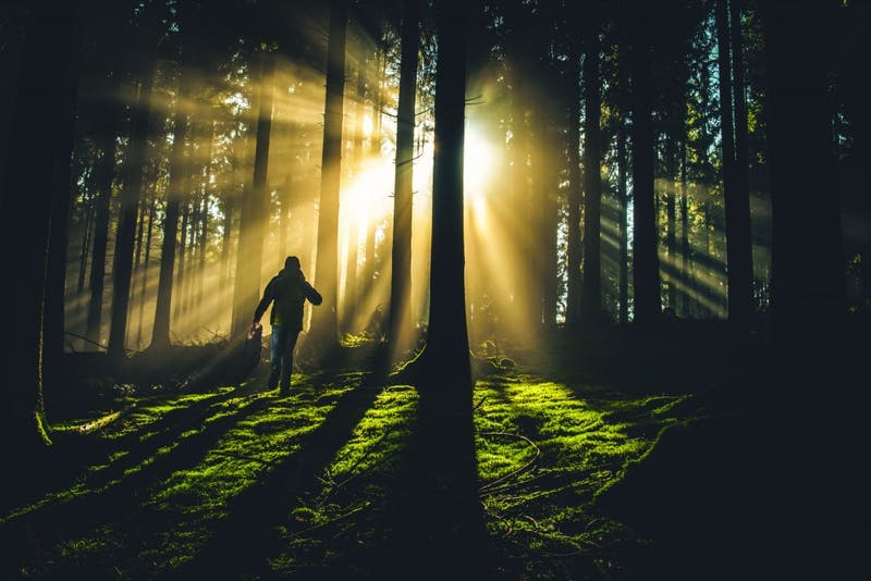 They must sneak through the forest to escape their hunters. (Photograph provided by Unsplash)