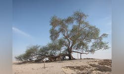 The Tree of Life is a staple attraction in Bahrain.
