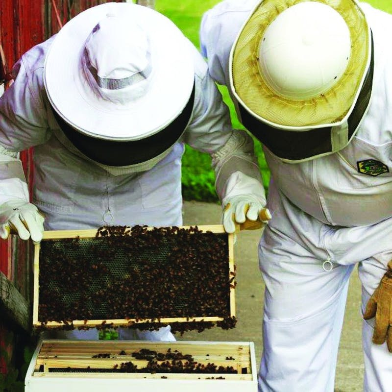 Jesse Brown, dean of students, checks on his bees' development. Brown currently observes two hives of his own. (Photograph provided by Jesse Brown)