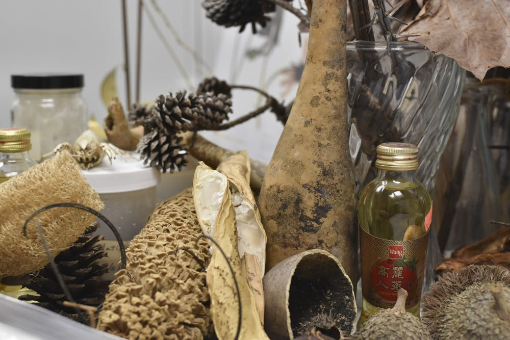 gandbfall2021-herbarium-zambrono-01