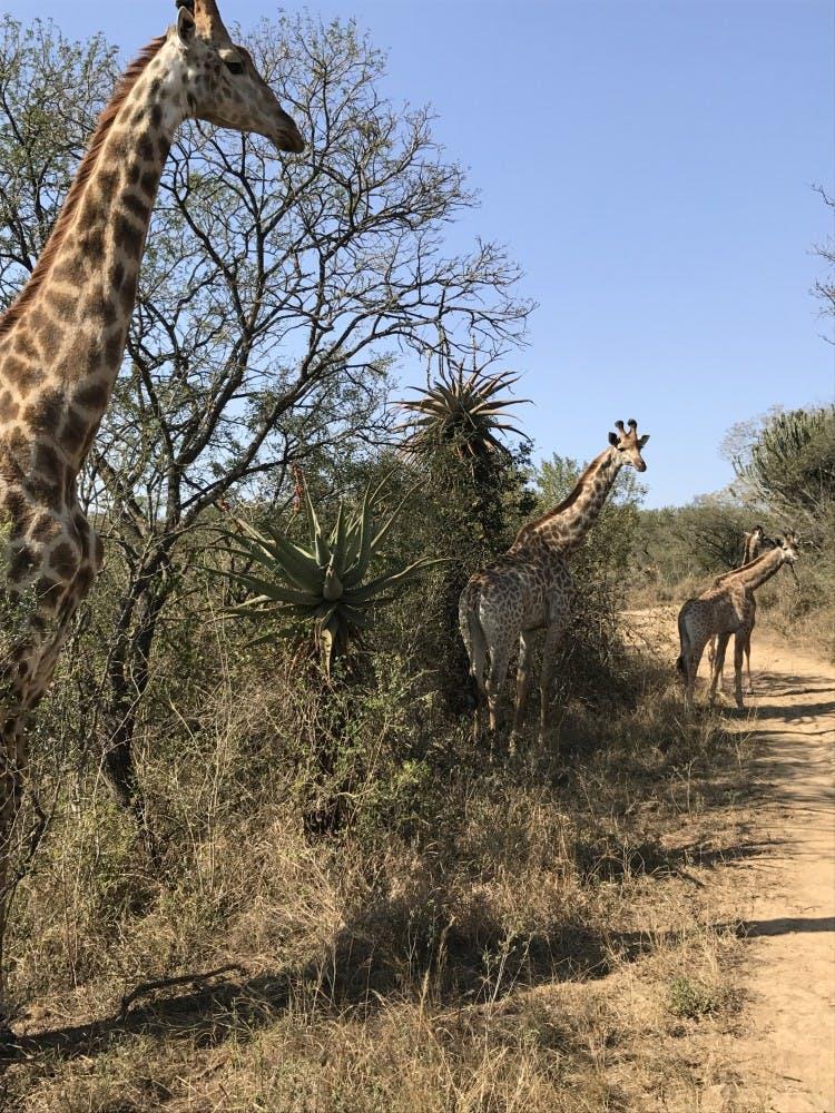 NamibiaStudyAbroad_RGB00