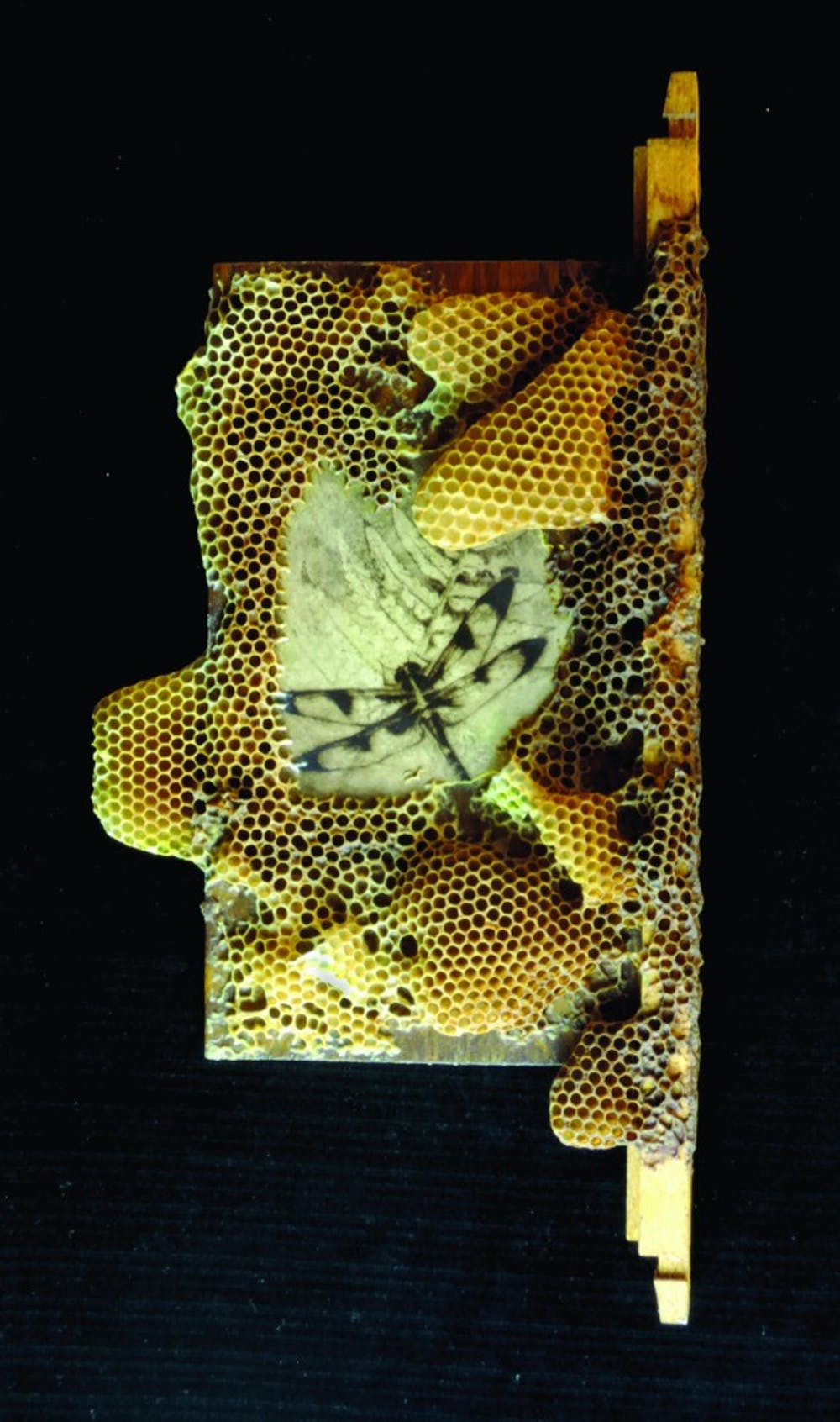 bees_prc00