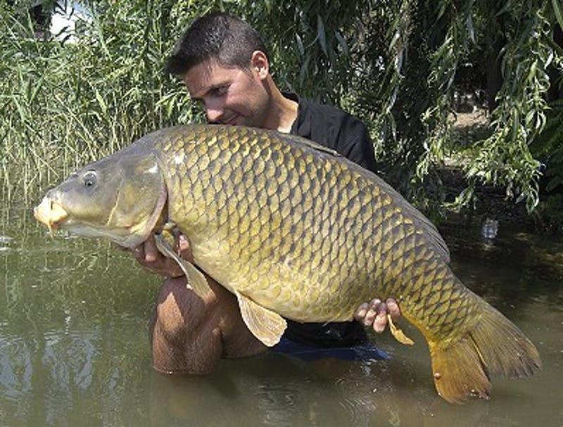 Courtesy Photo / freshare.netAsian carp invasion