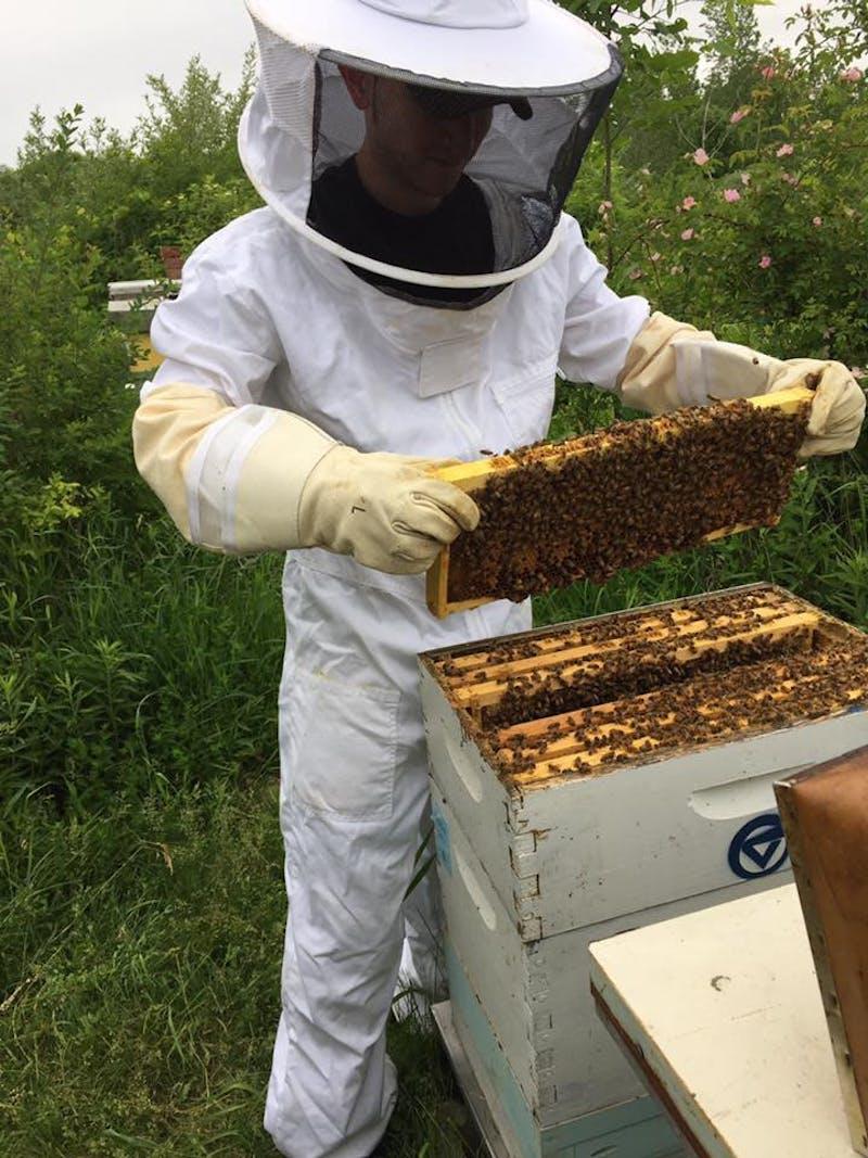 GVL / Courtesy - GVSU Beekeepers