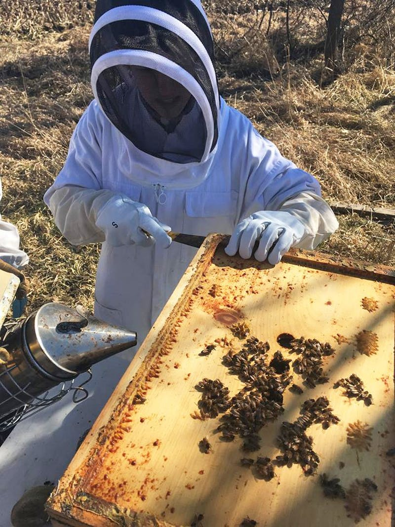 GVL / Courtesy - GVSU Beekeepers Club