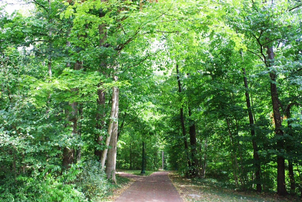 <p>Trees line the walkways Sept. 22 in Dunn Woods. Bloomington's urban tree population has increased in number and diversity.</p>