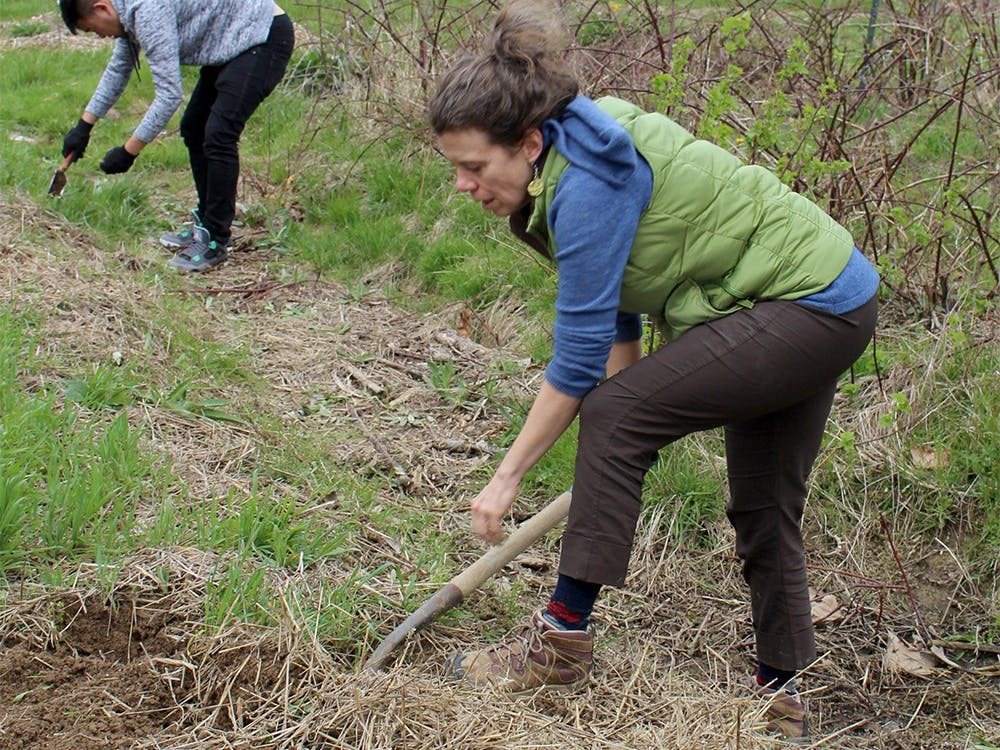 Amy Roche digs up Canadian thistle on Apr. 2 at the Bloomington Community Orchard. Roche has been involved with the orchard for six years.