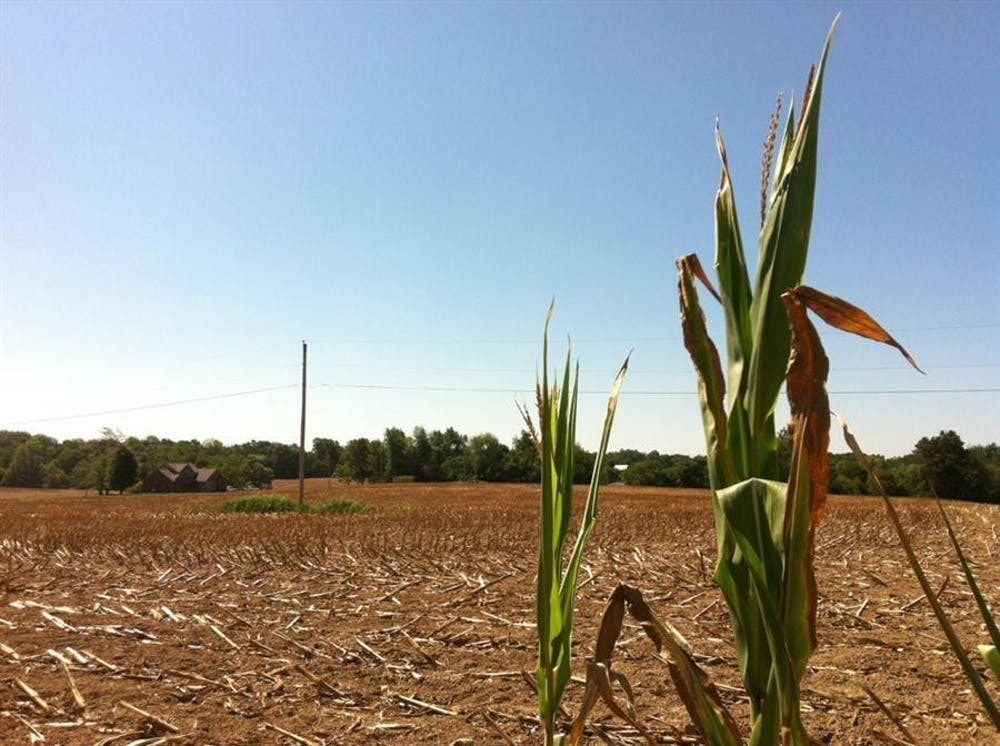 <p>Stalks of corn stand at the edge of a cornfield in Martin County, Indiana.</p>