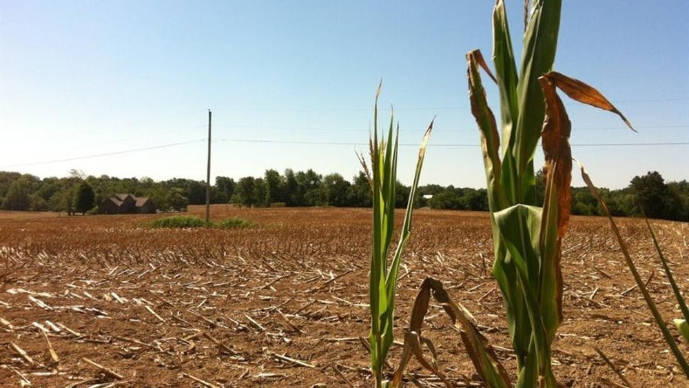 Stalks of corn stand at the edge of a cornfield in Martin County, Indiana.