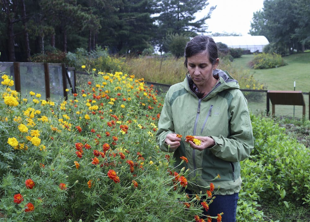 <p>Carissa Carman, Eskenazi School of Art, Architecture + Design senior lecturer, stands in her flower fields at the Hilltop Garden and Nature Center. Carman leads the Color Field Project, which researches ways to sustainably use flowers to produce dyes for fabrics.</p>