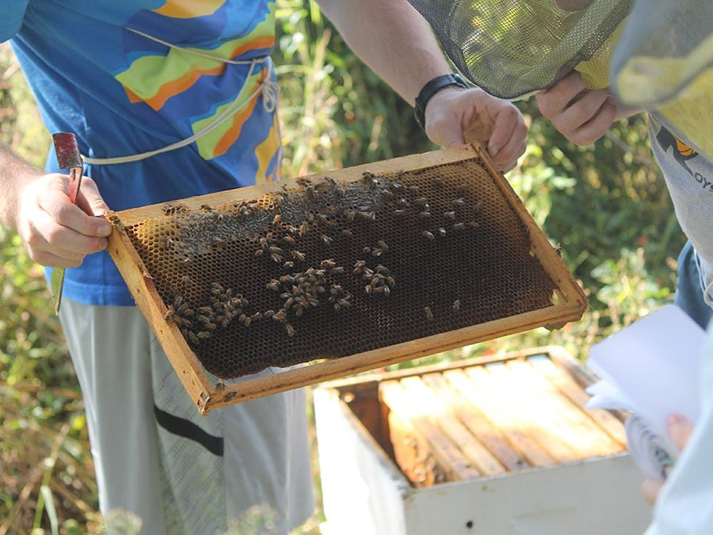 IU seniors and Beekeeping Club co-founders, Simon Kuntz and Lucas Moehle examine the bee's progress and honey produced.