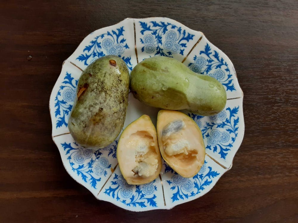 "IDS columnist Katharine Khamhaengwong describes pawpaws as ""sweet and soft, vaguely tropical, somewhere between a mango and a banana — hence the nickname 'Indiana banana.'"""