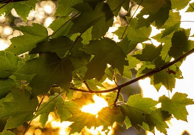 The sun sets in front of green leaves Sept. 16 near Sample Gates. A climate strike will take place Friday on campus. IU professors, research fellows, faculty and students will gather Friday at the Geology building to discuss climate change.
