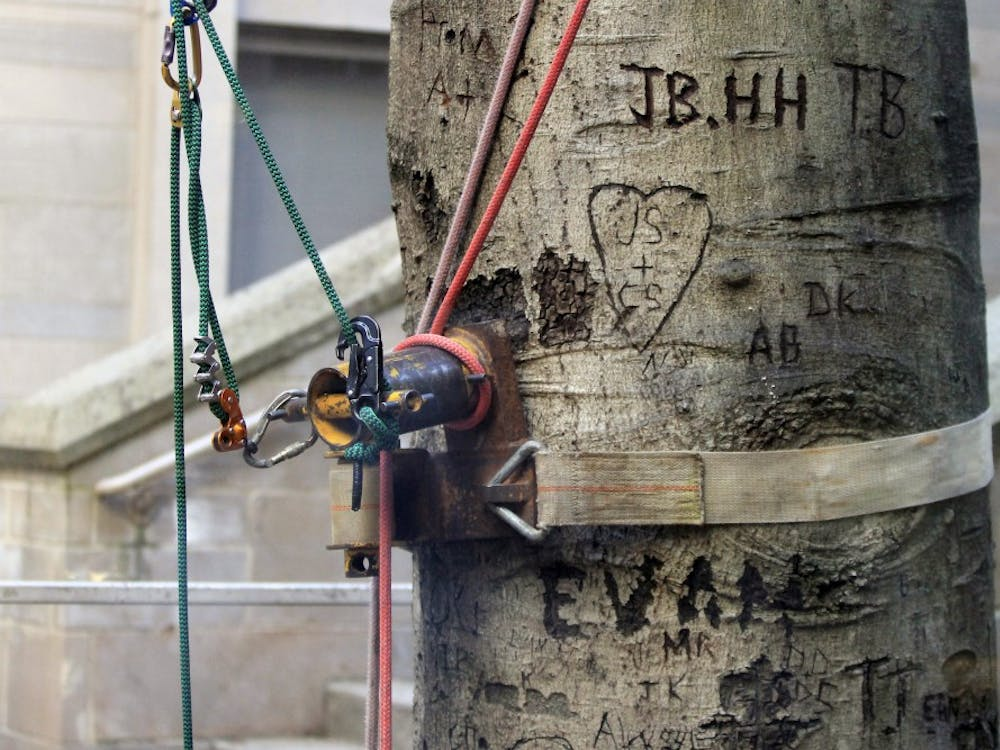 Cables and hooks are inserted in the Sweetheart Tree to prepare for it to be cut down and removed piece by piece. The American beech tree was scheduled to be removed April 11 and 12 due to years of rot.