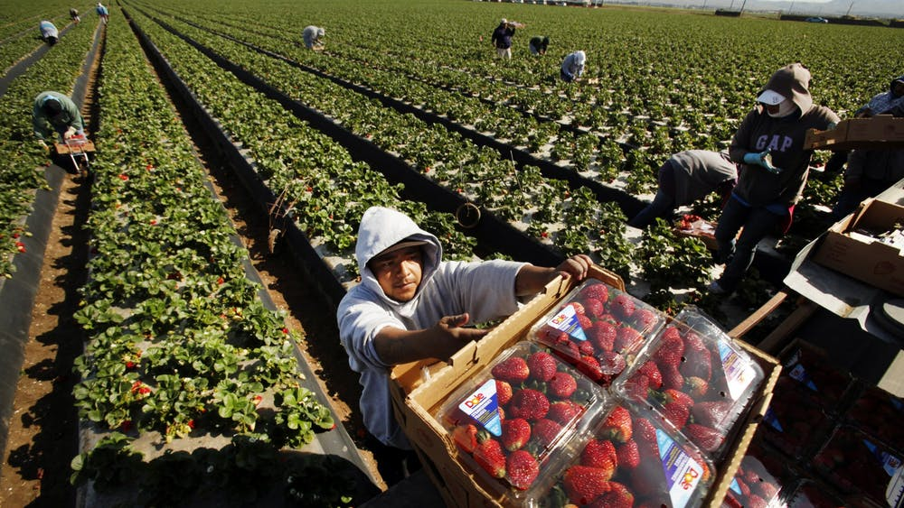 Domingo Suarez carries a box of strawberries picked for Dole Foods on April 2, 2013, as he works alongside other workers in a Santa Maria, California, field.