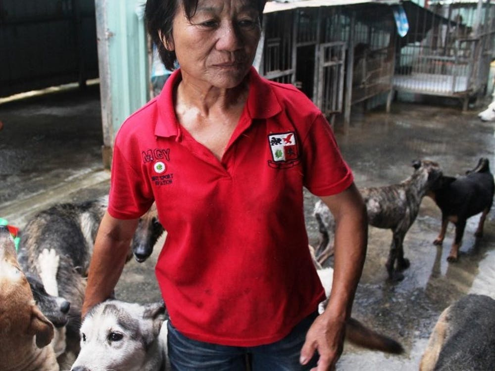 Huang Xue stands with her dogs at her shelter in Hai Fong, Pingtung on July 23, 2012 in Tai wan. She explained that she must work from 3am until 11pm to take care of the 800 dogs now residing in her shelter.